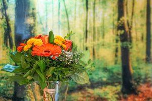 Blumen - Josenhof Ferienwohnung Hofblick