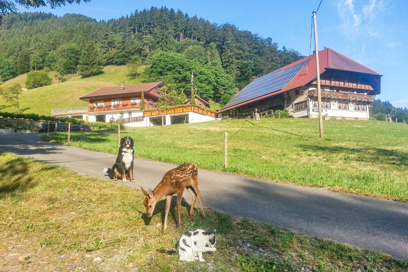 Hund, Reh und Katze vor dem Josenhof