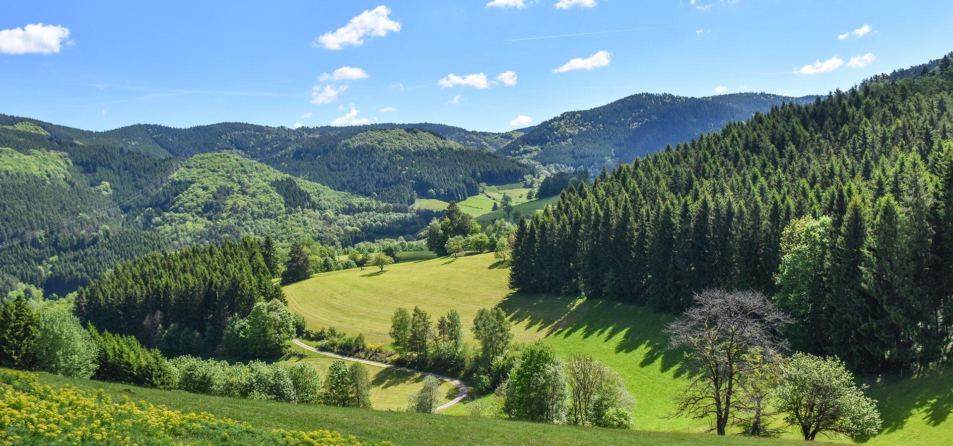 Josenhof Umgebung: Obere Ecke in Kirnbach